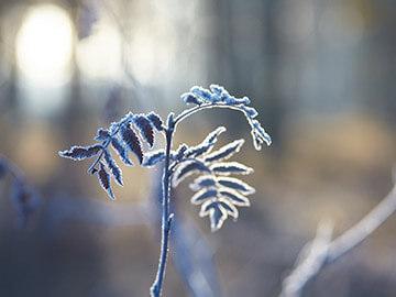 霜指数(指数:20:霜が降る可能性は低い)