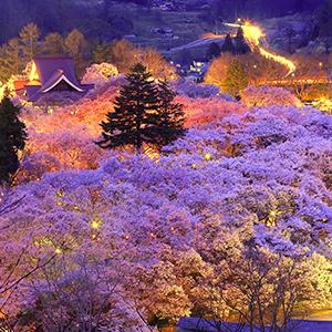 日本さくら名所100選 天下第一の桜とは?