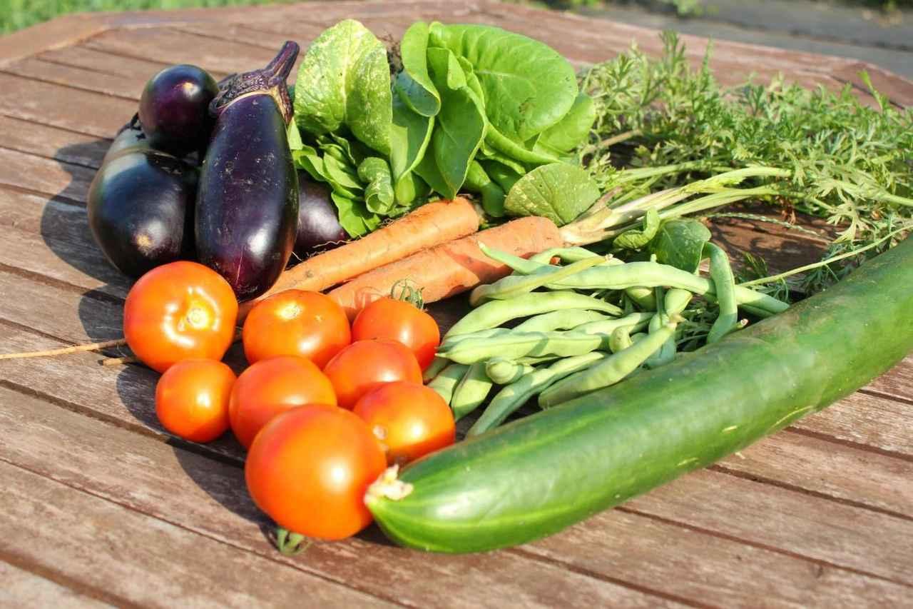 野菜 プランター