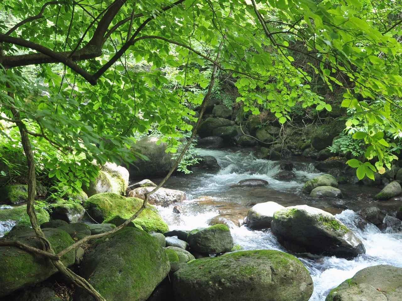 【おすすめハイキングスポット】栃木県『尚仁沢湧水』 天然の湧き水と美しい森林浴に癒される