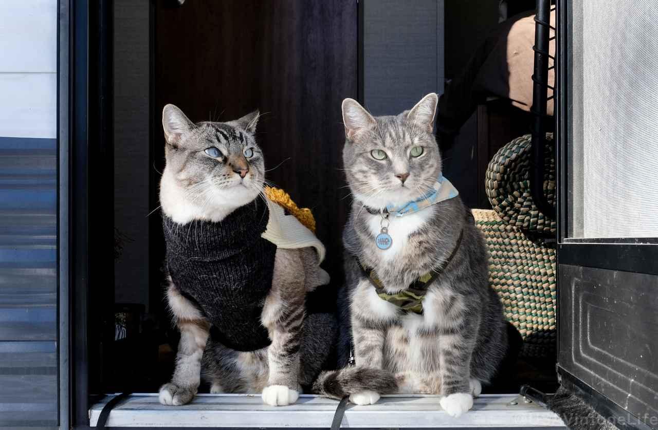 【With猫キャンプ】愛猫とキャンプを楽しむ筆者のおすすめアイテム&注意点を伝授します!