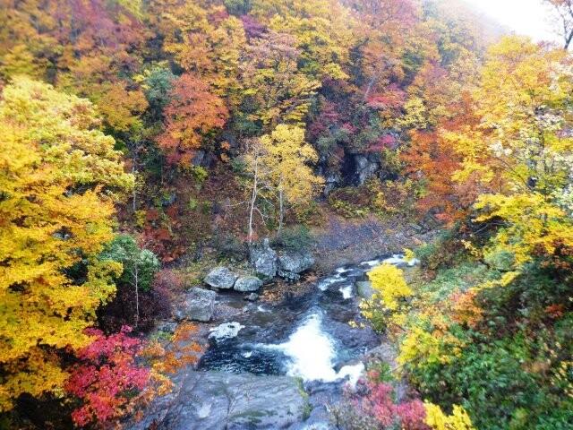 賀老高原ブナ原生林の写真