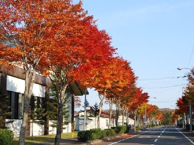 標茶中学校の並木道の写真