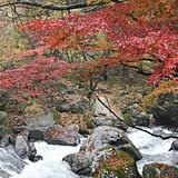 川上川渓谷「蒼ヶ島」