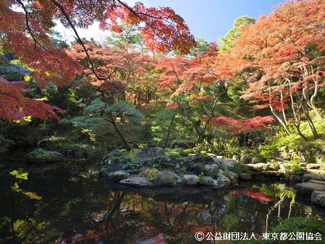 殿ヶ谷戸庭園の写真