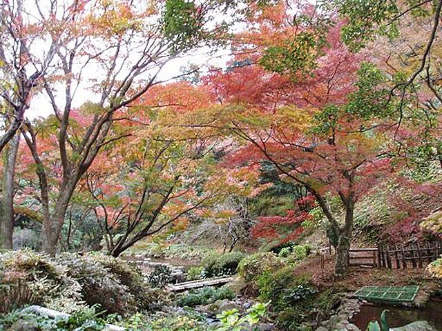 丸山公園の写真