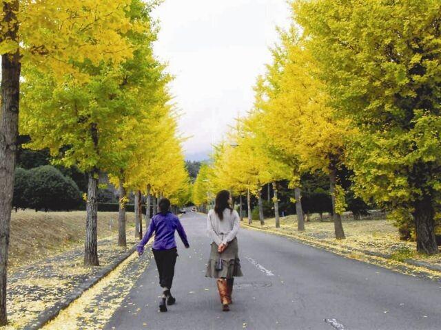 駿河平大通りの写真