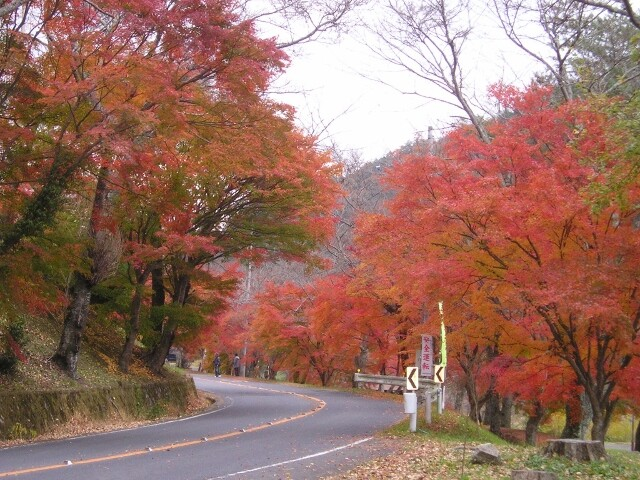 奥矢作湖の写真