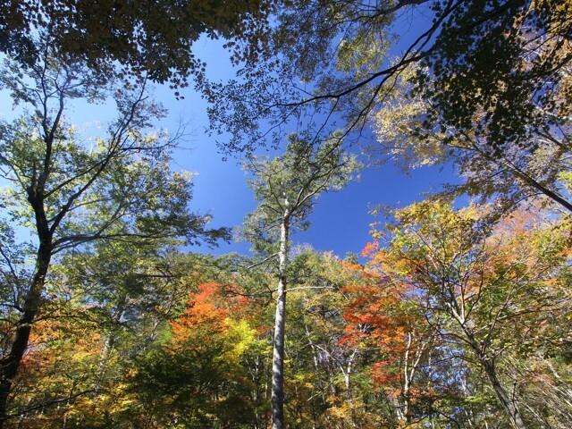 段戸裏谷原生林きららの森の写真