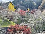小原(四季桜と紅葉)