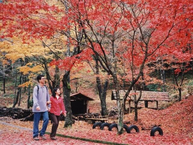 愛知県民の森の写真