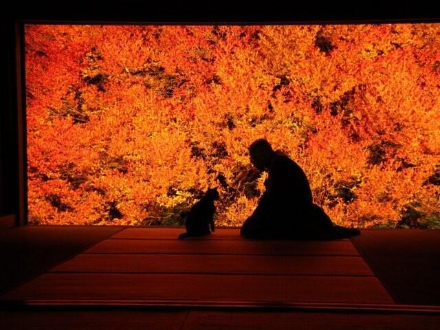 但馬安国禅寺のドウダンツツジの写真