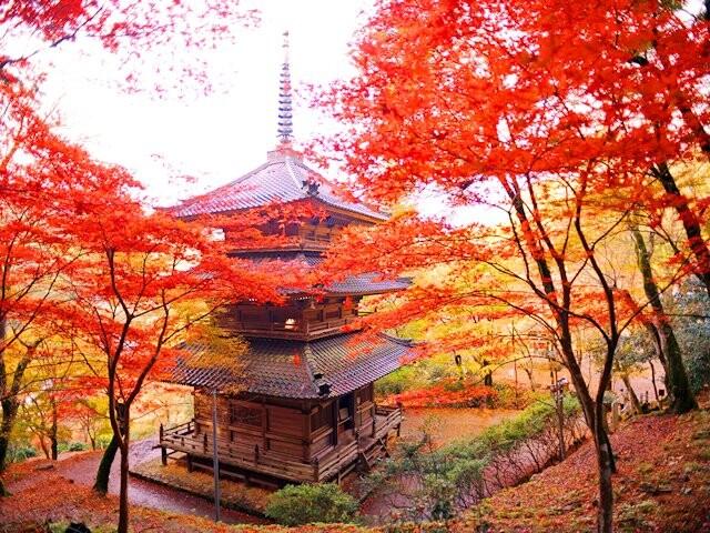 高源寺の写真