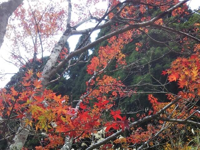 緑仙峡の写真