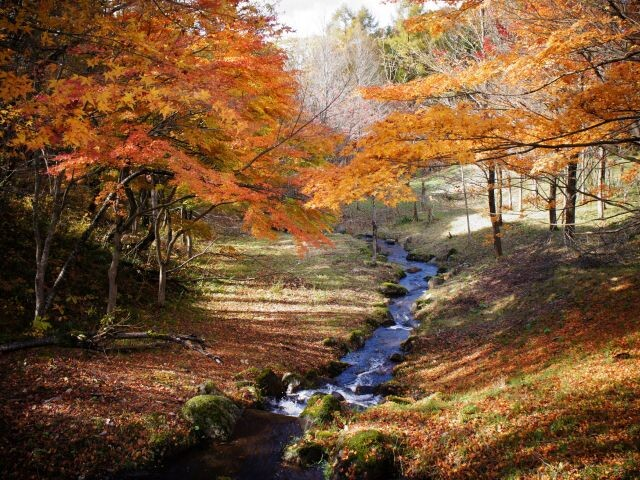 陣峰市民の森の写真