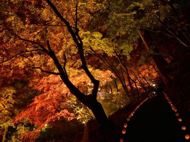 東郷公園 秩父御嶽神社の写真
