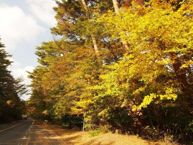 県道1号線(丸尾-大浪池登山口)の写真