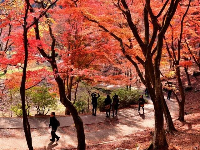 修善寺自然公園(もみじ林)の写真
