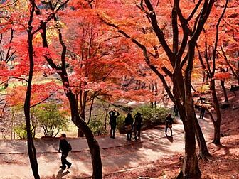 修善寺自然公園(もみじ林)