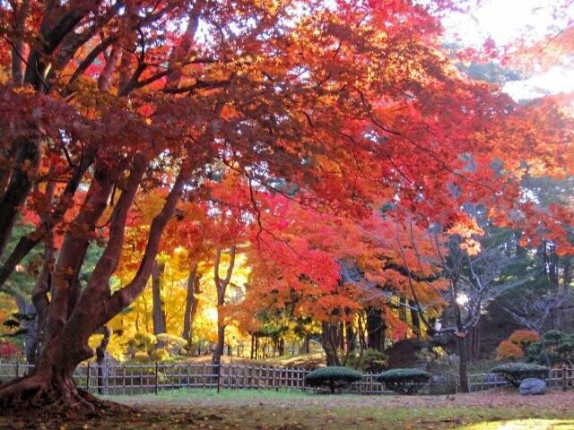 香雪園(見晴公園内)の写真