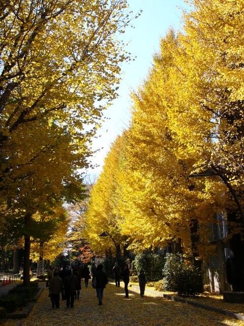 上野恩賜公園の写真