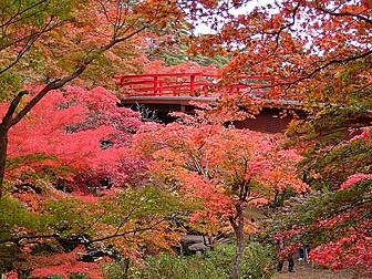 弥彦公園(もみじ谷)