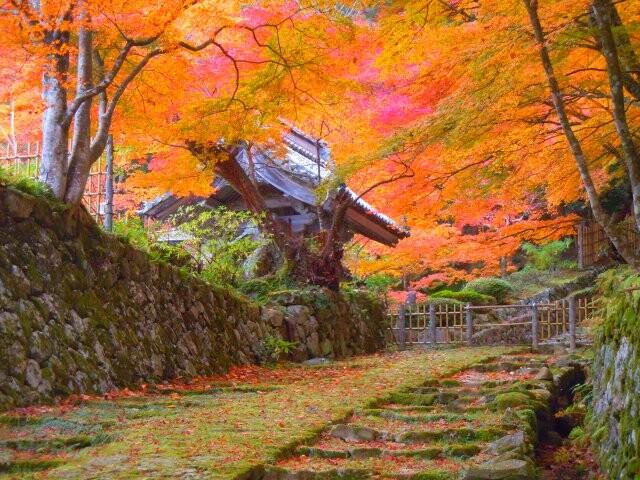 「国史跡」釈迦山 百済寺(湖東三山)の写真