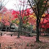 笠置山もみじ公園