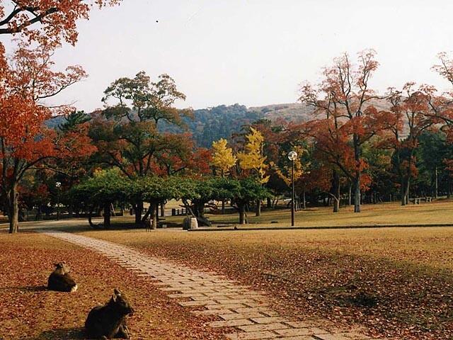 奈良公園の写真