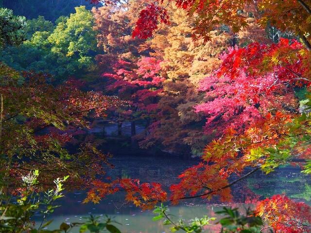 神戸市立森林植物園の写真