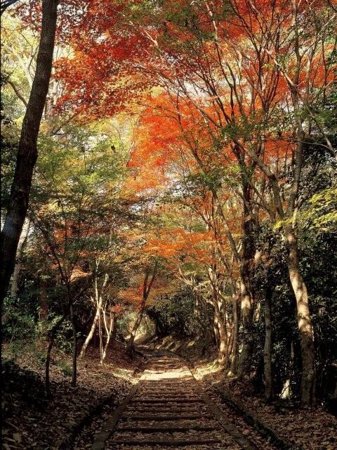 龍野公園 紅葉谷・聚遠亭の写真