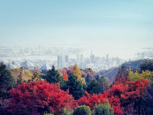 神戸布引ハーブ園/ロープウェイの写真