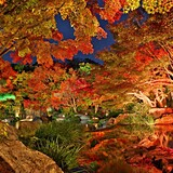 姫路城西御屋敷跡庭園 好古園