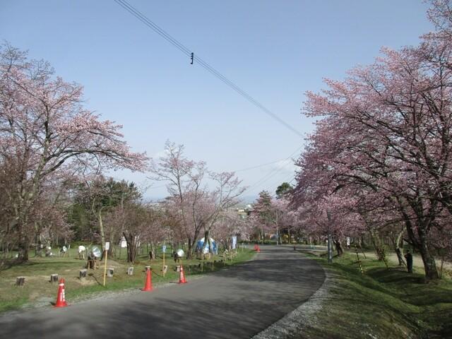旭山公園の写真