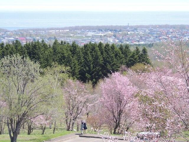 天都山桜公園の写真