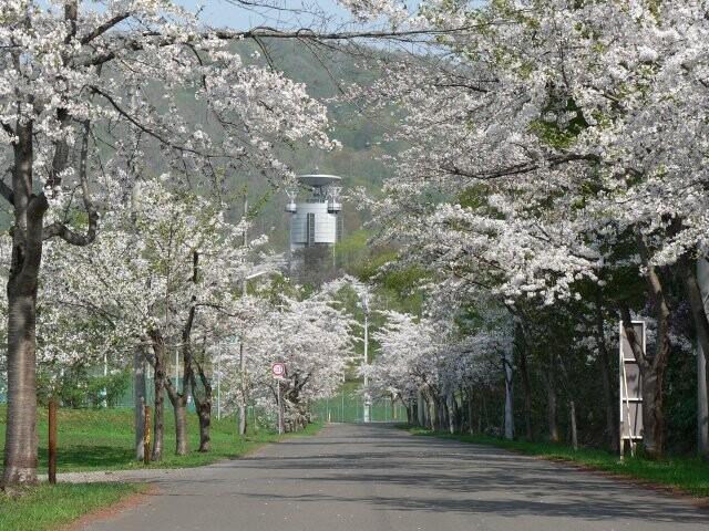 美唄市東明公園の写真