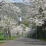 美唄市東明公園