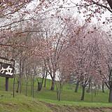 芦別市旭ケ丘公園