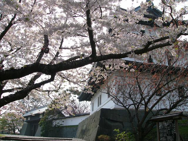 松前公園の写真