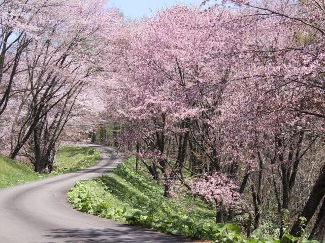 奈井江町にわ山森林自然公園の写真