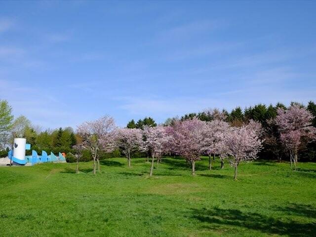 モエレ沼公園の写真