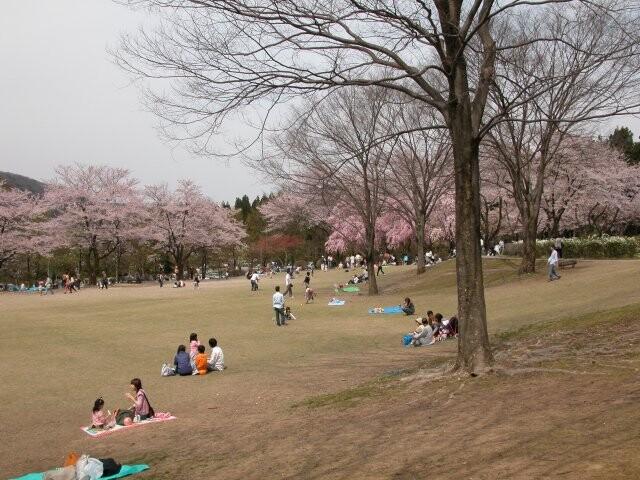 石川県農林総合研究センター 林業試験場 樹木公園の写真
