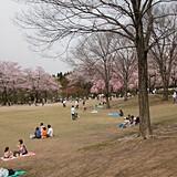 石川県農林総合研究センター 林業試験場 樹木公園
