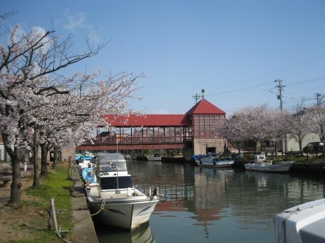 内川周辺の桜並木の写真