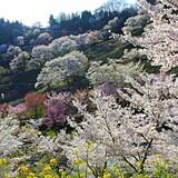 東山夢の郷公園(夢農場)