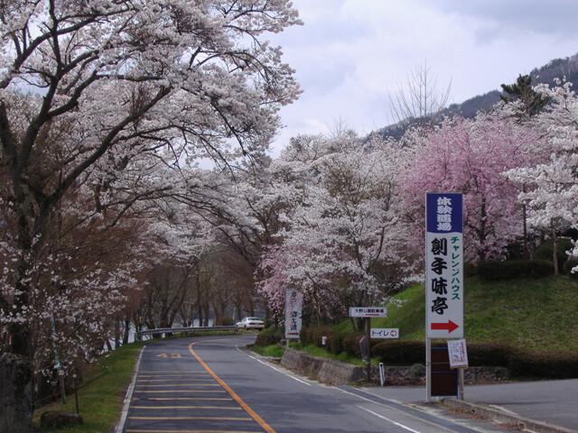 奥矢作湖畔桜並木の写真