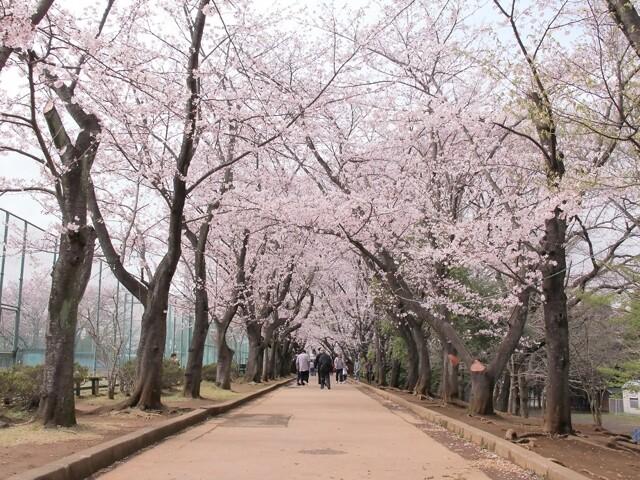 市制記念公園の写真
