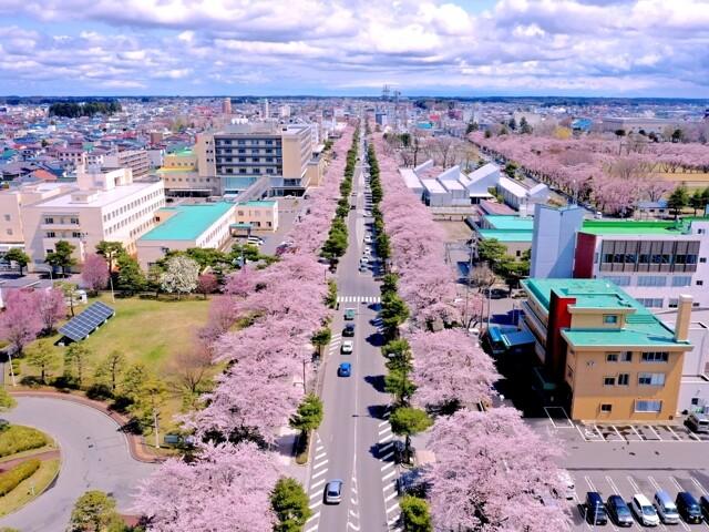 十和田市官庁街通り(駒街道)の写真