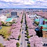 十和田市官庁街通り(駒街道)