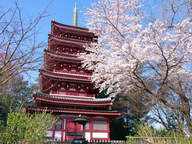本土寺の写真